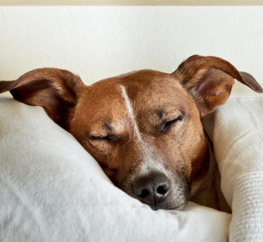 chien sommeil sophrologie stan carrey