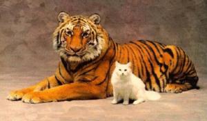 comment avoir une vie inspirante tigre et chat